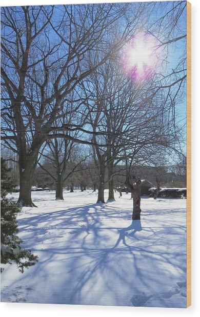 Winter Morning Boston Back Bay  Wood Print