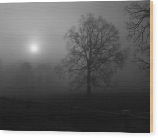 Winter Oak In Fog Wood Print