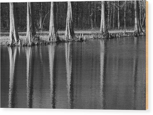 Winter Reflections - Cypress Tree Art Print Wood Print