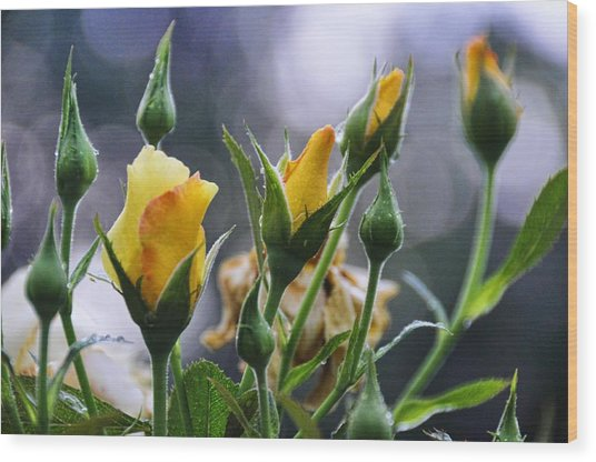 Winter Roses Wood Print by Jan Amiss Photography