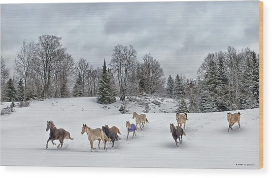 Winter Run Wood Print by Peter Lindsay
