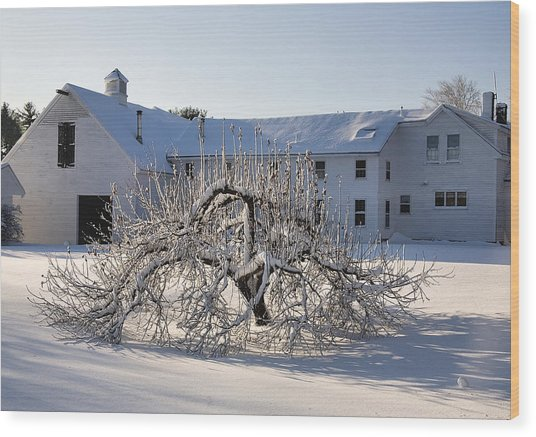 Winter Sculpture Wood Print