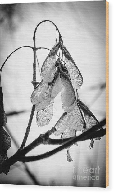 Winter Seeds Wood Print