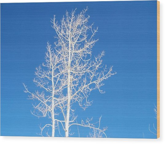 Winter Sky Wood Print
