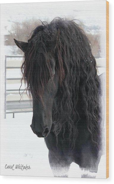 Winter Stallion Wood Print