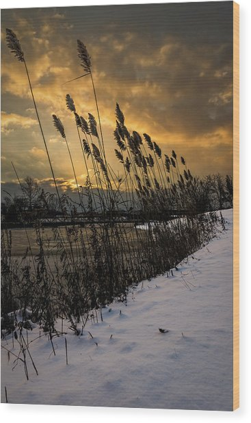 Winter Sunrise Through The Reeds Wood Print