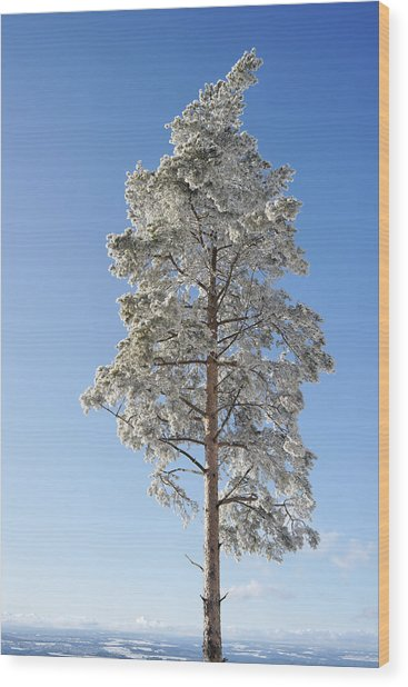 Winter Tree Germany Wood Print
