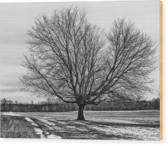 Winter Tree Wood Print by Susan Desmore