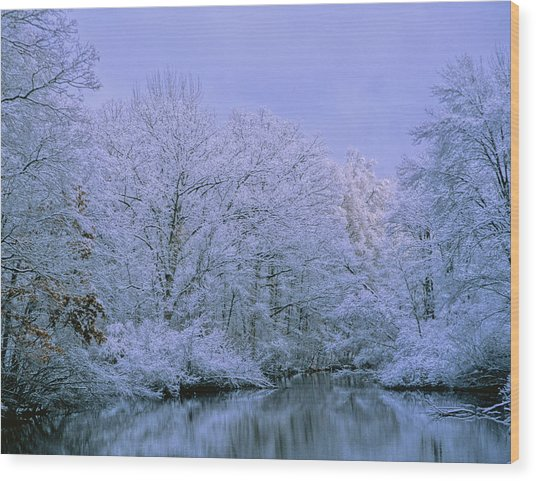 Winter Trees Wood Print by Carolyn Smith