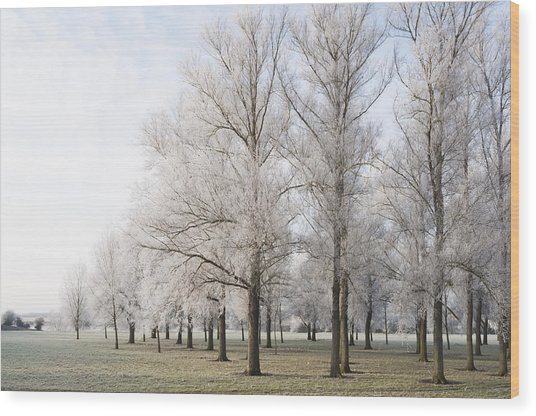Winter Trees Wood Print