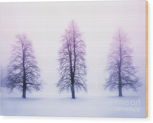 Winter Trees In Fog At Sunrise Wood Print
