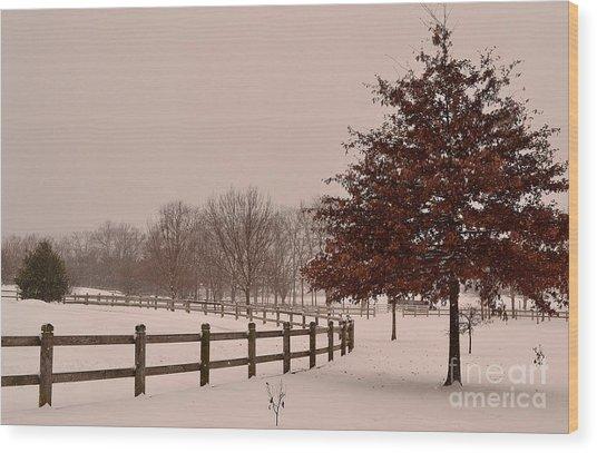 Winter Trees In Park Wood Print