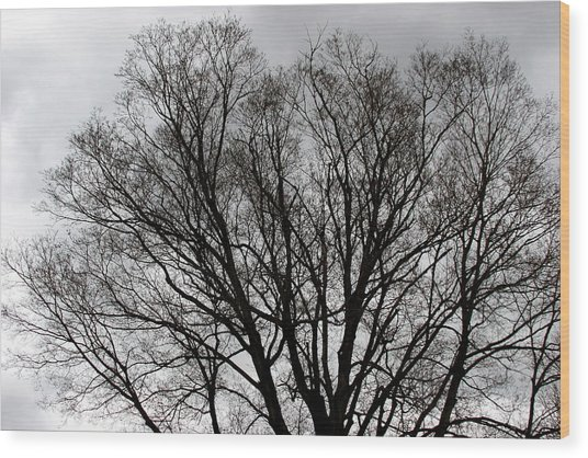 Winter Trees Number Two Wood Print
