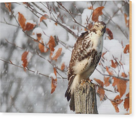 Winter Visitor  Wood Print
