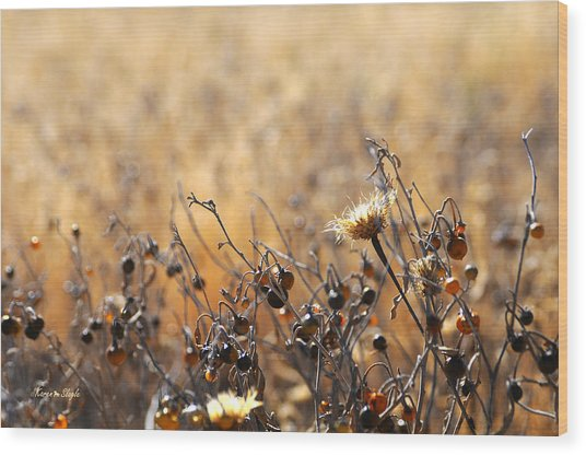 Winter Weeds Wood Print