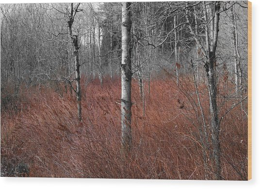 Wood Print featuring the photograph Winter Wetland by Jani Freimann