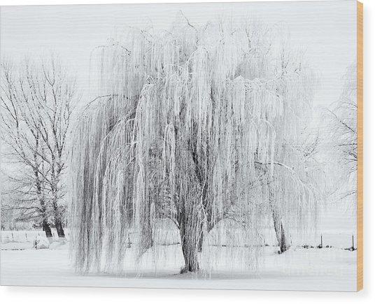 Winter Willow Wood Print