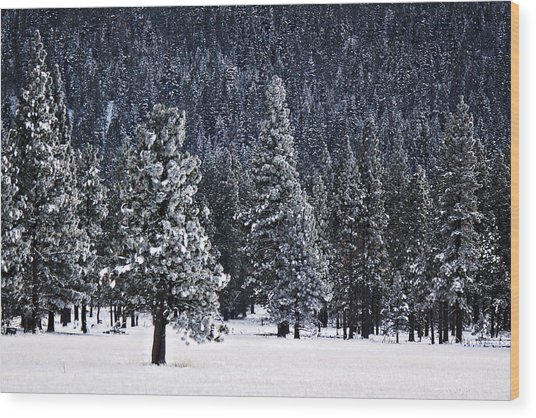Winter Wonderland Wood Print