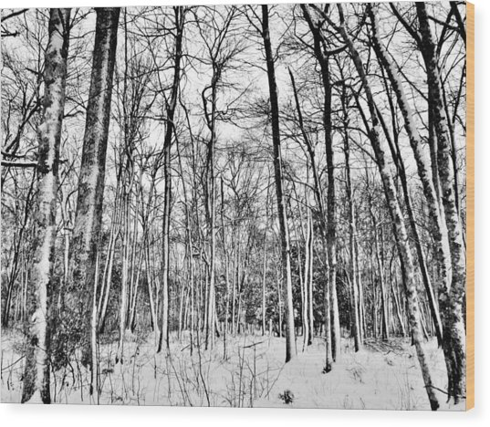 Winter Woods Wood Print