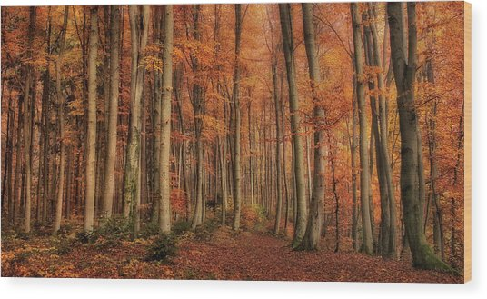 Winter\'s Soon To Come Wood Print by Norbert Maier
