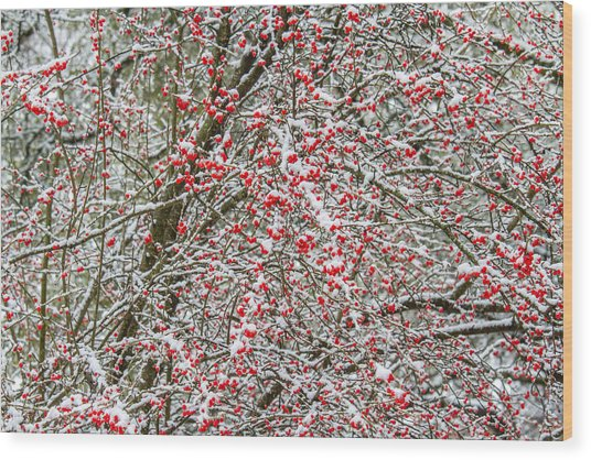 Winterberry During A Snowfall Wood Print