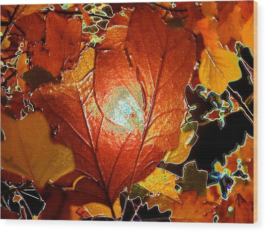 winters autumn in Pasadena Wood Print