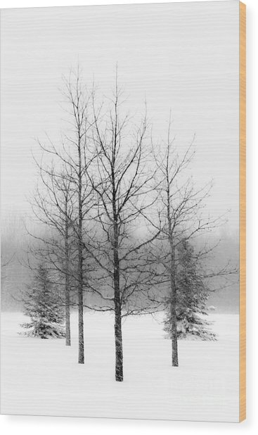 Winter's Bareness  Wood Print