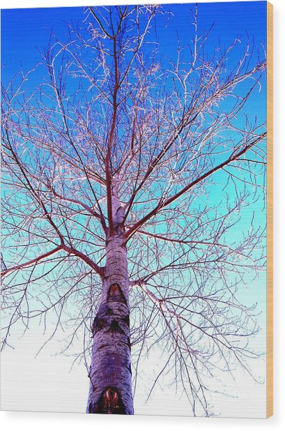 Winters Freeze Wood Print by Sharon Costa