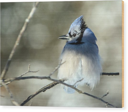Winter's Jay Wood Print