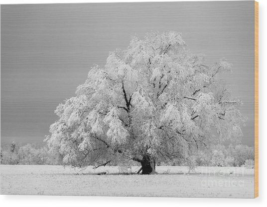 Winter's Majesty II Wood Print