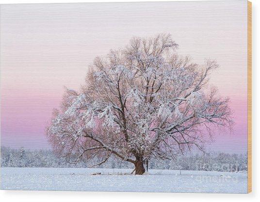 Winter's Majesty Morning Wood Print