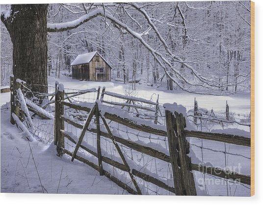 Winter's Mystique   Wood Print