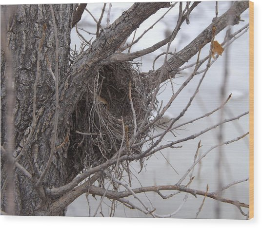 Winter's Nest Wood Print