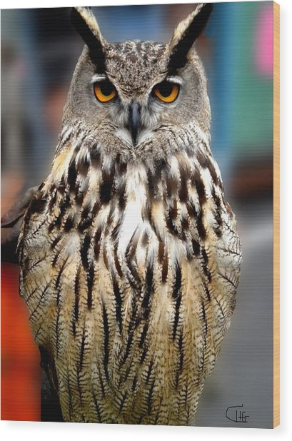 Wood Print featuring the photograph Wise Forest Mountain Owl Spain by Colette V Hera  Guggenheim