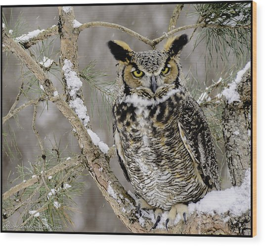 Wise Old Great Horned Owl Wood Print