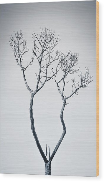 Wishbone Tree Wood Print