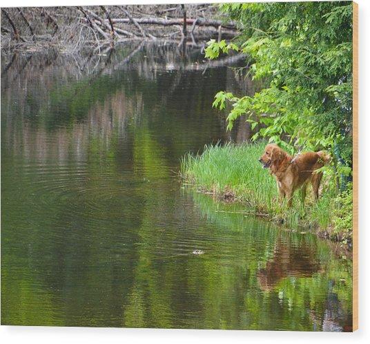 Wishin' He Was Fishin' Wood Print