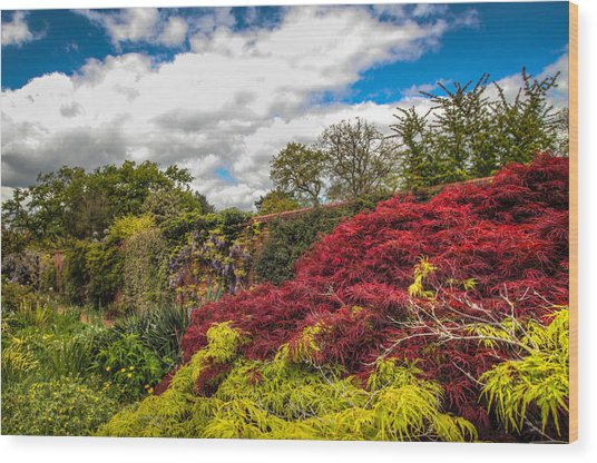 Wisley Garden Wall Wood Print