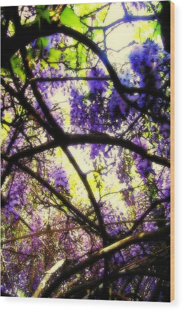 Wisteria Branches Wood Print