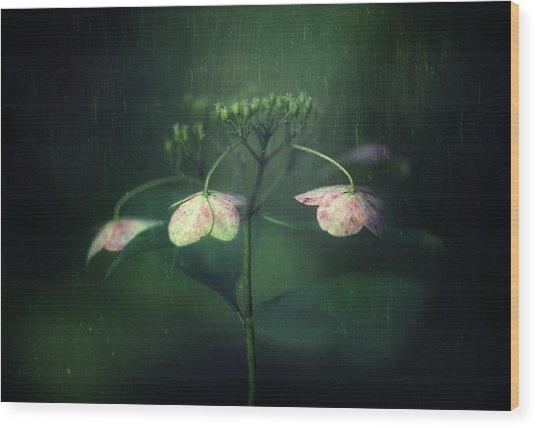 Withe Hydrangea Wood Print by Takashi Suzuki