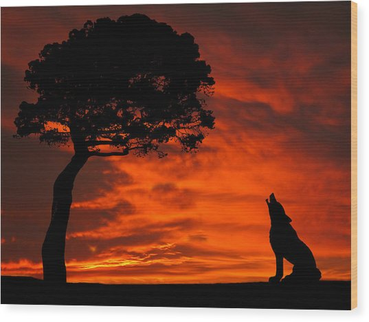 Wolf Calling For Mate Sunset Silhouette Series Wood Print