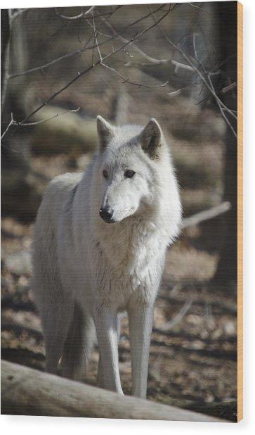 Timber Grey Wolf Wood Print