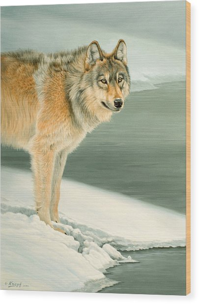Wolf Portrait-lamar Valley  Wood Print