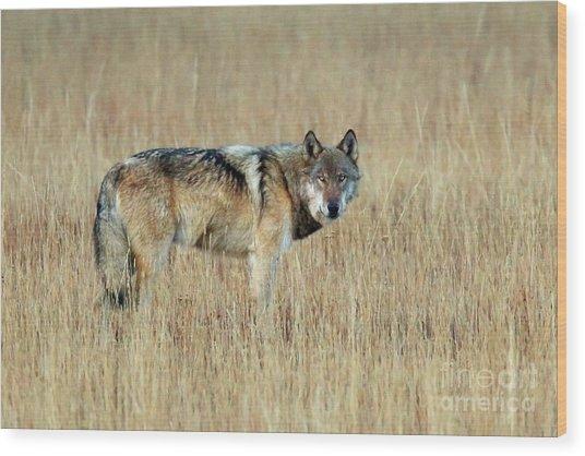 Wolf Profile Wood Print