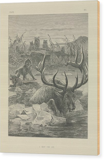 Wolves Hunting A Stag Wood Print