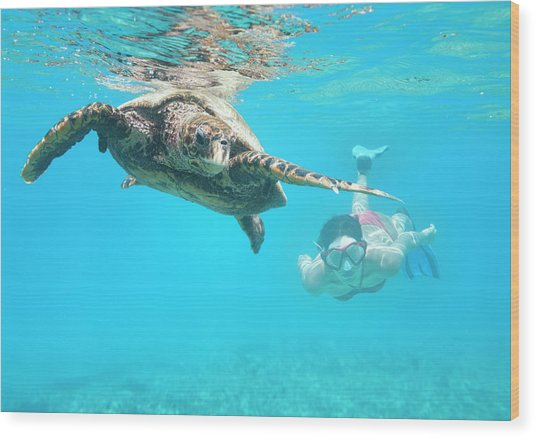 Woman Diving With A Hawksbill Sea Wood Print by 4fr