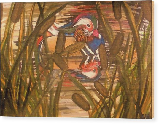 Wood Duck At Peace Wood Print