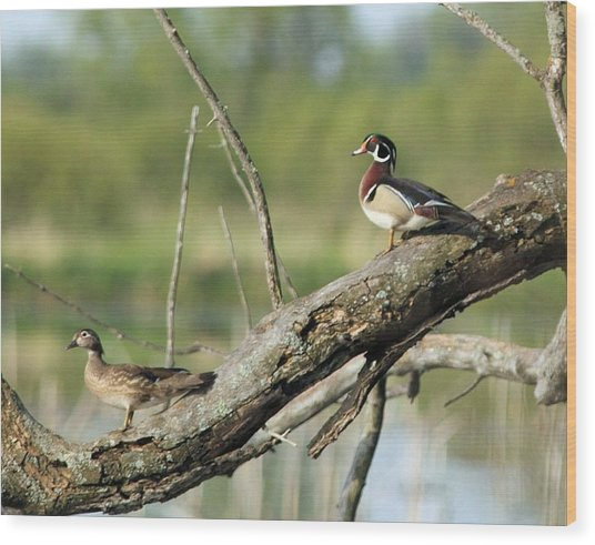 Wood Duck Pair In Tree Wood Print