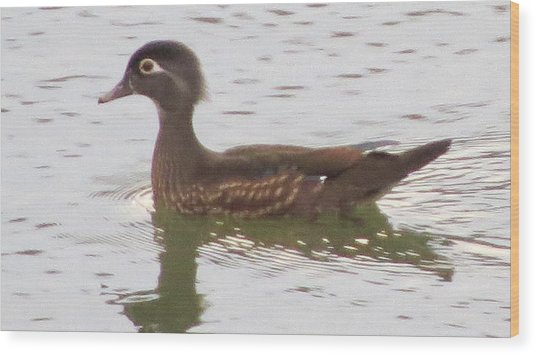 Wood Duck Visits The Pond Wood Print by Diane Mitchell