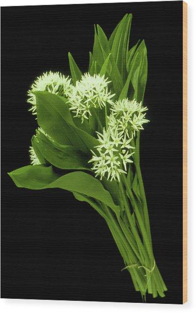 Wood Garlic Plants Wood Print by Th Foto-werbung/science Photo Library